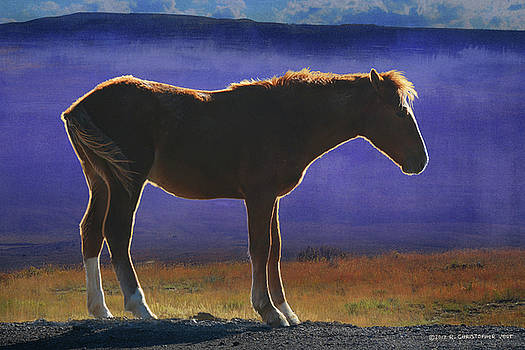 Back Lit Horse by R christopher Vest