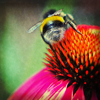 Angela Doelling AD DESIGN Photo and PhotoArt - Back Side - Bumble bee