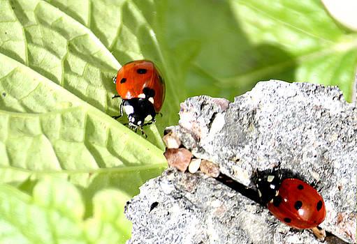 Back to Nature by Toon De Zwart