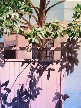 Laura Aceto - Back Yard