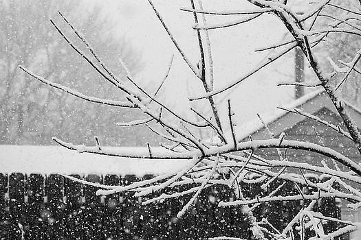 Back Yard Snow Branches by Mark Russell