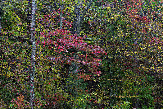 Background of autumn leaf shapes and colors by Natalie Schorr