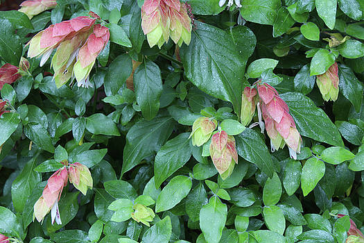 Background of Pink and Green Leaves by Natalie Schorr