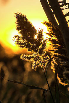 Backlit by the Sunset by Zawhaus Photography