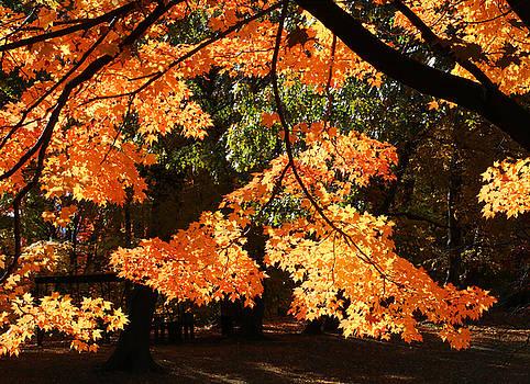 Backlit Orange by William Selander