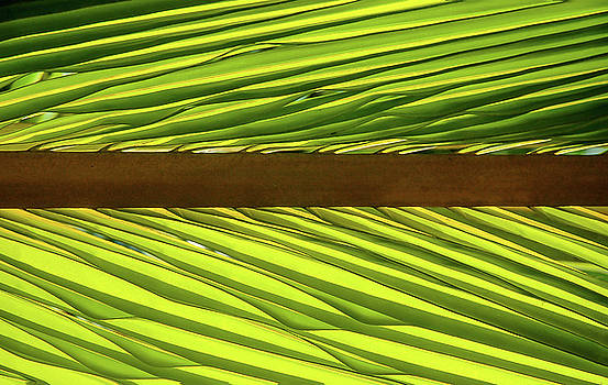 Herb Paynter - Palm West