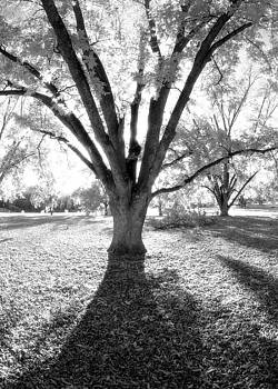 Backlit Pecan in Georgia by Alan Mogensen