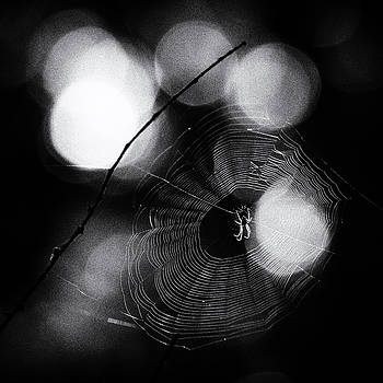 Backlit Spider by Wendy Chapman
