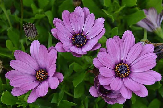 Backyard Blossom by Heidi Pence