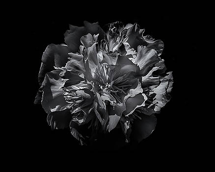 Backyard Flowers In Black And White 25 by Brian Carson