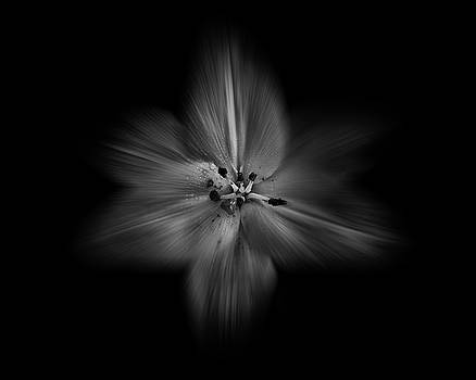 Backyard Flowers In Black And White 28 Flow Version by Brian Carson