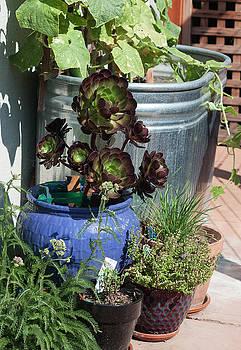 Backyard Garden Series III by Suzanne Gaff