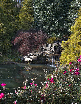 Backyard Ponds by Nena Pratt