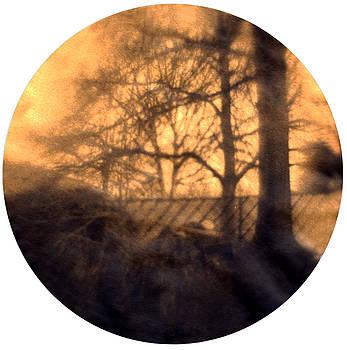 Backyard Woodpile by Diana Ludwig