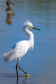 Bad Hair Day by Emily Bristor