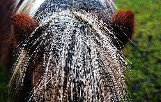 Bad hair Day by Nik Watt