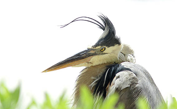 Bad Hair Day by William Griffin
