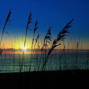 Bad Sea Oats  by Robert Francis