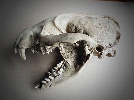Badger Skull by Lisa Marina