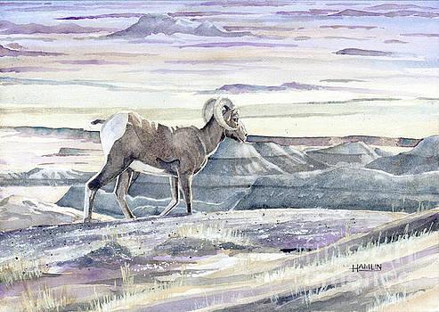 Badlands Bighorn by Steve Hamlin