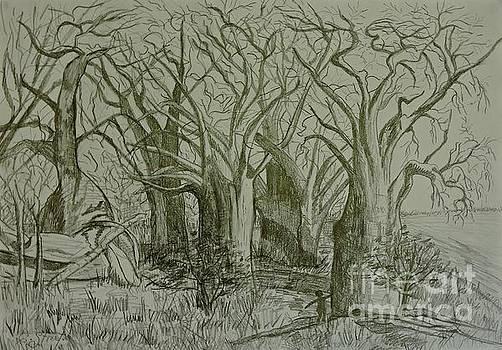Caroline Street - Baines Baobabs