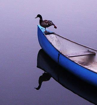 Balance by Daniele Smith