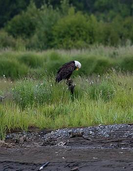 Gloria Anderson - Balancing eagle