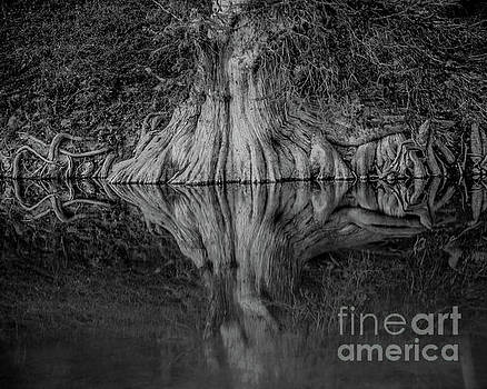 Bald Cypress Reflection in Black and White by Michael Tidwell