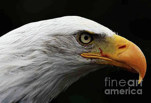 Bald Eagle by Alan Harman