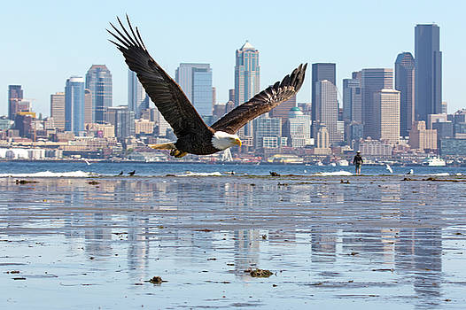 Bald Eagle And The Seattle Cityscape by Matt McDonald