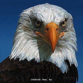 Bald Eagle by Danny Day