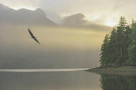 Bald Eagle Dawn by Christian Heeb