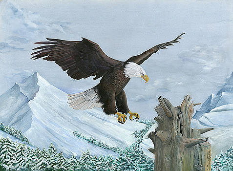 Bald Eagle in Flight by Marsha Friedman
