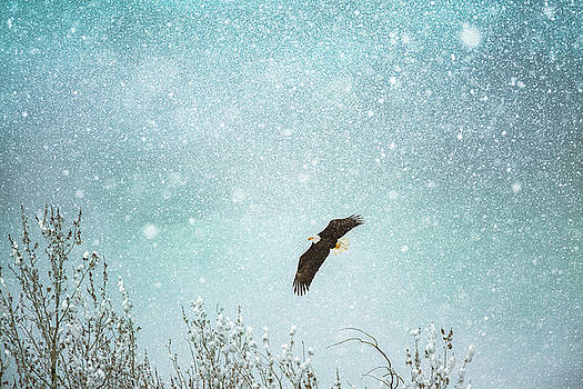 Bald Eagle In Snow Storm by Debi Bishop