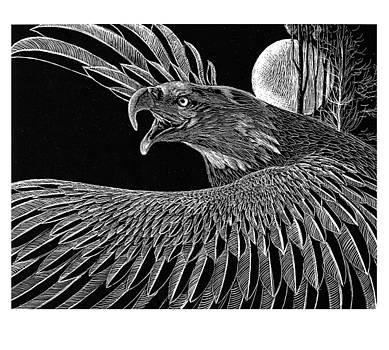 Bald eagle by Kean Butterfield