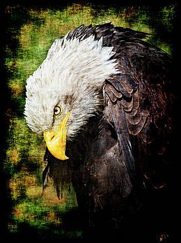 Bald eagle by Leopold Brix