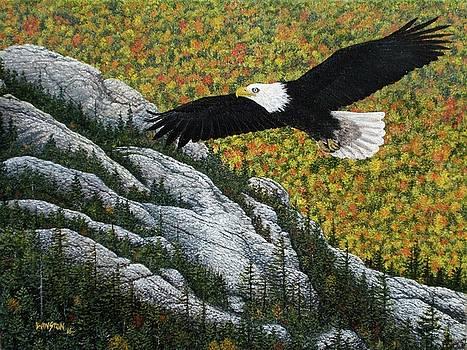 Bald Eagle over Catamount Mountain, Adirondacks by Michael Winston