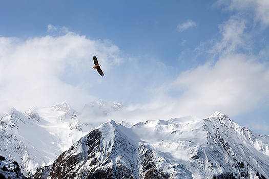 Bald eagle over mountains by Michele Cornelius