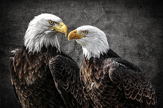Wes and Dotty Weber - Bald Eagle Pair