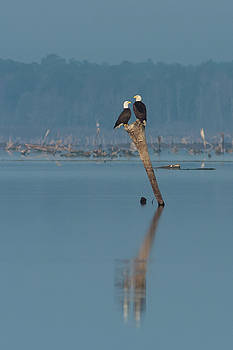 Paul Rebmann - Bald Eagle Pair