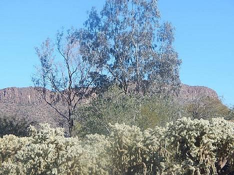 Balding Trees Tucson Arizona Foothills by Mozelle Beigel Martin
