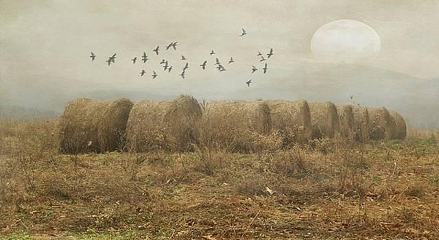 Bales and Birds by Stephanie Calhoun