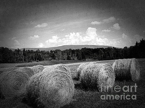 Onedayoneimage Photography - Bales in Monochrome
