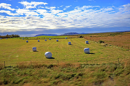 Bales of hay for the animals near Reykjavik, Iceland by Allan Levin