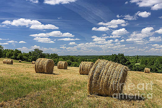 Bales of Hay by Tony Priestley