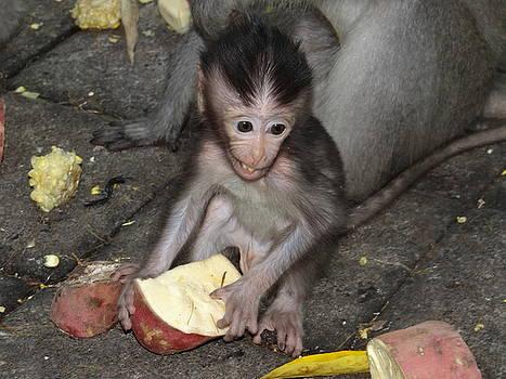 Balinese baby monkey eating by Exploramum Exploramum
