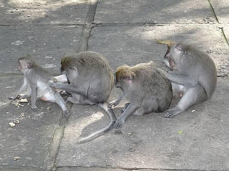 Balinese Monkey Flea Time by Exploramum Exploramum