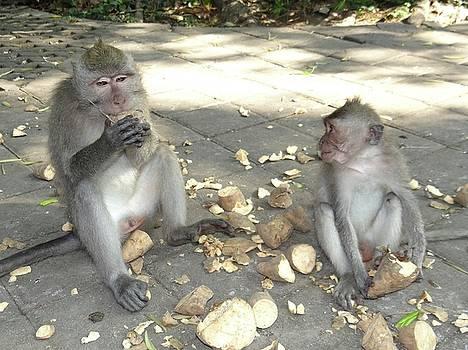 Balinese monkeys eating by Exploramum Exploramum