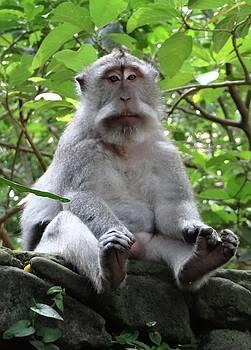 Balinese serious monkey by Exploramum Exploramum