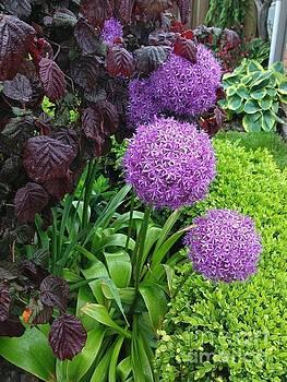 Balls of Purple by Deborah MacQuarrie-Selib